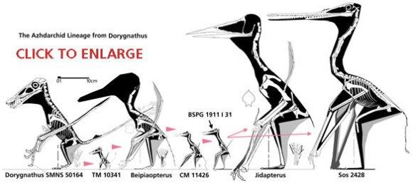 Proto-azhdarchid lineage