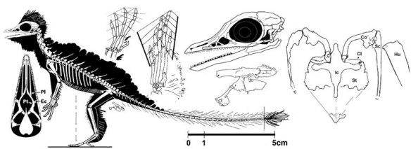 Cosesaurus aviceps