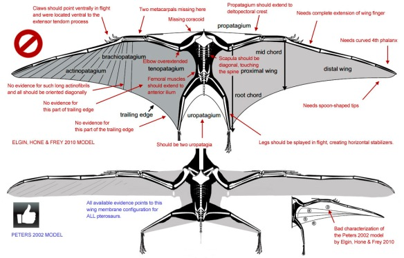 Figure 8. Click to enlarge. Problems with the Elgin, Hone and Frey (2011) pterosaur wing model with corrections proposed by Peters (2002).