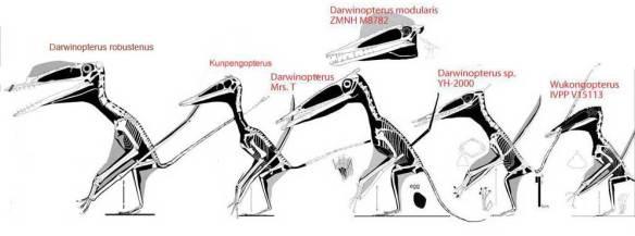 Darwinopterids