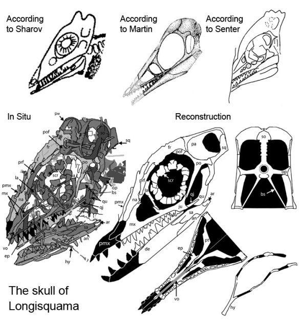The skull of Longisquama has portrayed by other workers and as documented here.