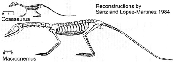 Cosesaurus illustrated as a juvenile Macrocnemus by Sanz and Lopez-Martinez