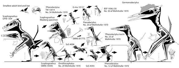 The descendants of Scaphognathus.