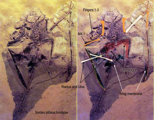 The myth of the pterosaur uropatagium