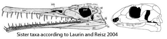 acleistorhinus-mesosaurus