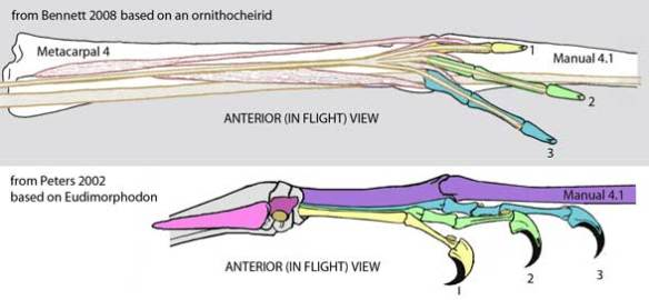 Bennett and Peters pterosaur finger orientation configurations