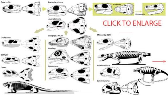 Caseasauria, Milleretta and sister taxa