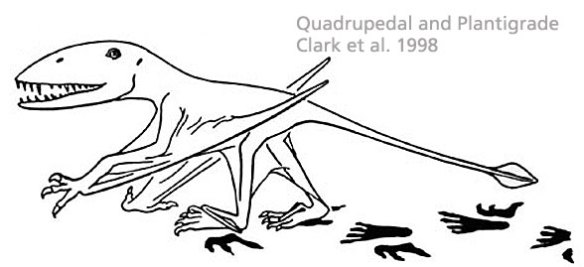 Dimorphodon as a plantigrade quadruped