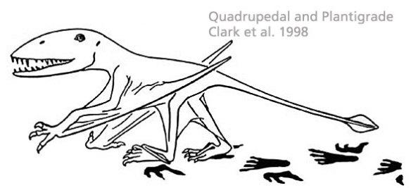 Dimorphodon as a plantigrade quadruped