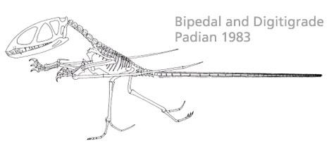 Dimorphdon Padian