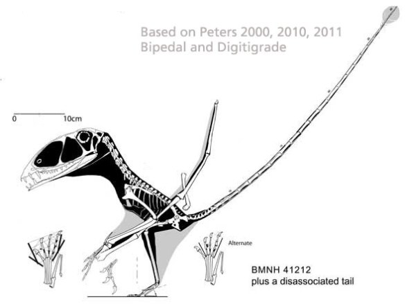 Dimorphodon in a bipedal and digitigrade configuration