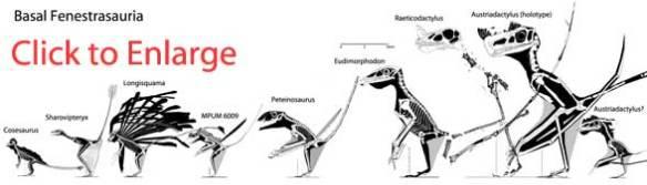 Fenestrasaurs
