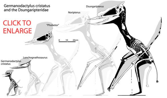 Germanodactylus and the Dsungaripteridae