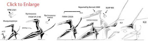 Nyctosaurus clade
