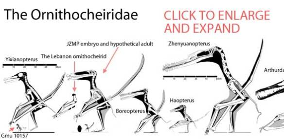 The Ornithocheiridae.