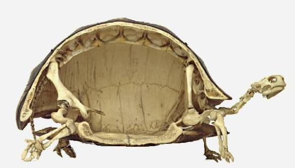 A turtle is side view.