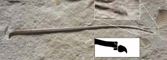 pterosaur wing ungual