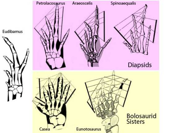 Eudibamus foot
