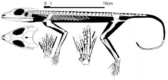 Figure 2. Emeroleter nests between Macroleter and Romeriscus + Lanthanosuchus.
