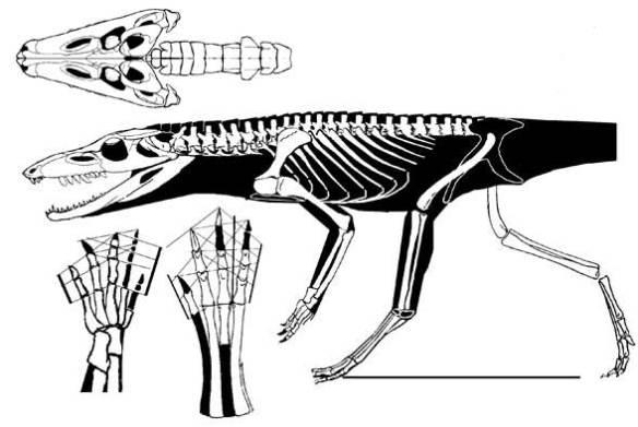 Hesperosuchus