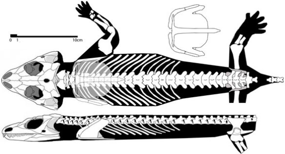 Macroleter, the closest known sister to Lanthanosuchus