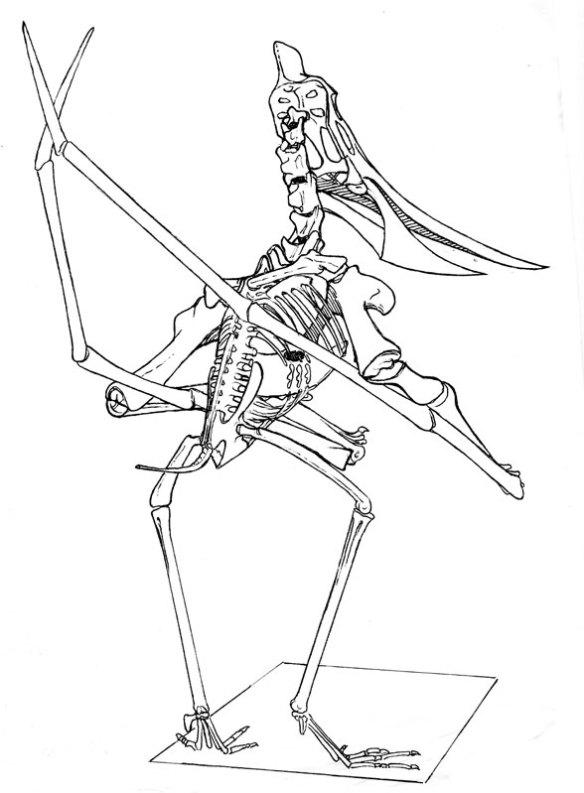 Standing Pteranodon