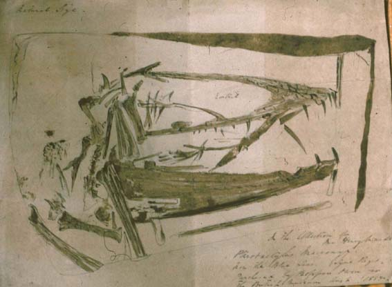 The Mary Anning Dimorphodon skull.