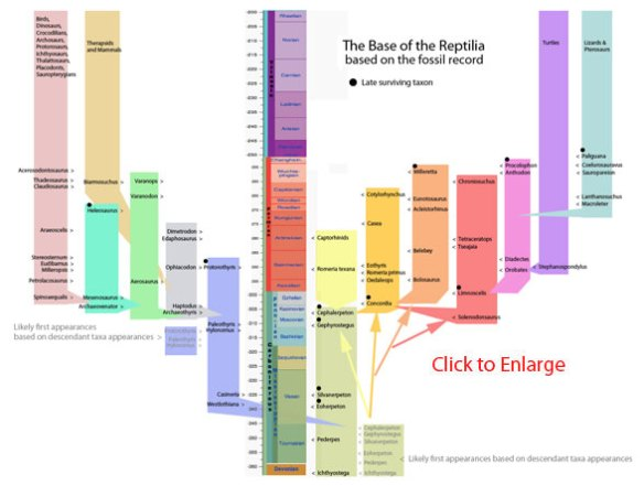 A chronology of the basal Reptilia.