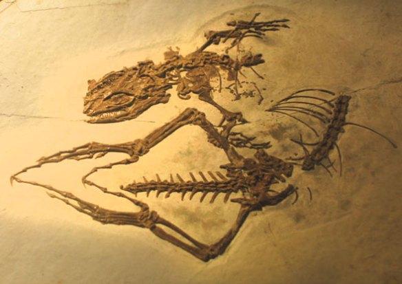 Dalinghosaurus