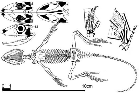 Homoeosaurus
