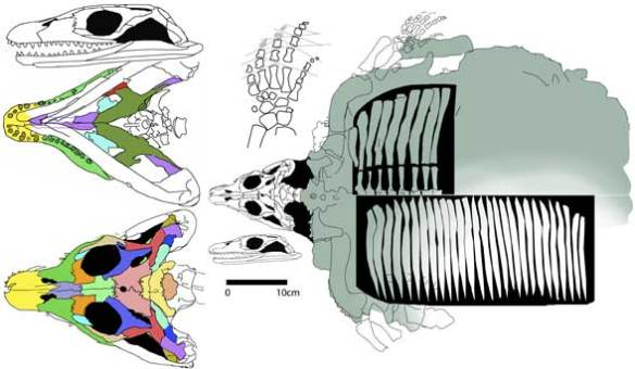 Sinosaurosphargis.