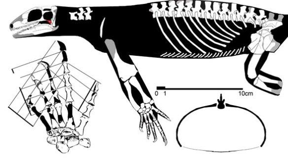 Acerosodontosaurus