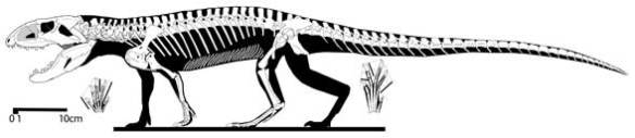 Revueltosaurus revised from a tracing by Jeffrey Martz.