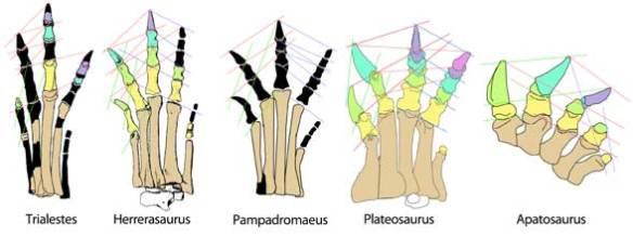 Sauropod pedal evolution.