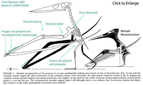 Nyctosaurus reconstruction