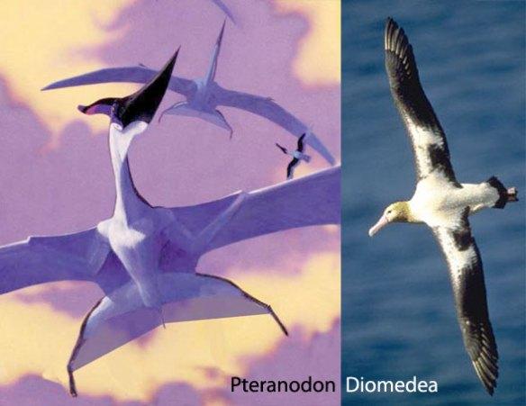 Pteranodon and the albatross