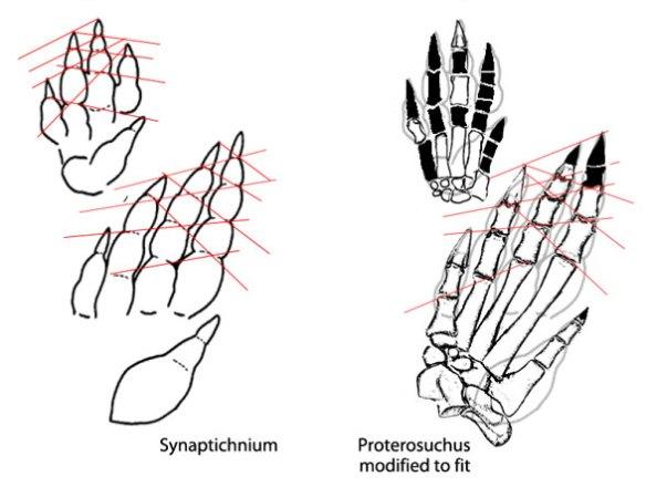 Synaptichnium