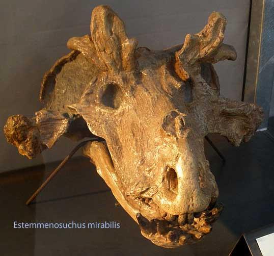 The skull of Estemmenosuchus,