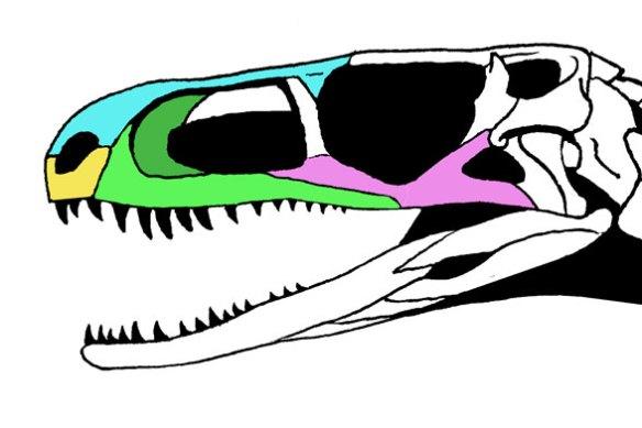 Gracilisuchus nose