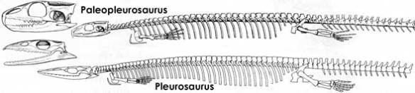 The pleurosaurs