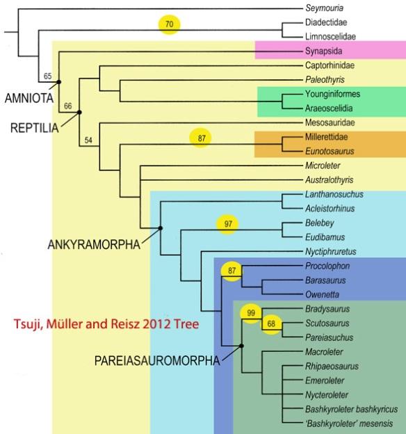 Tsuji, Muller and Reisz (2012) tree of basal reptiles.