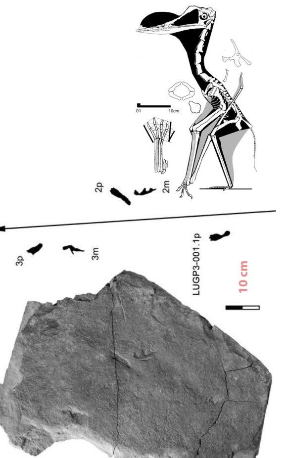 Wenxiyuan pterosaur tracks.