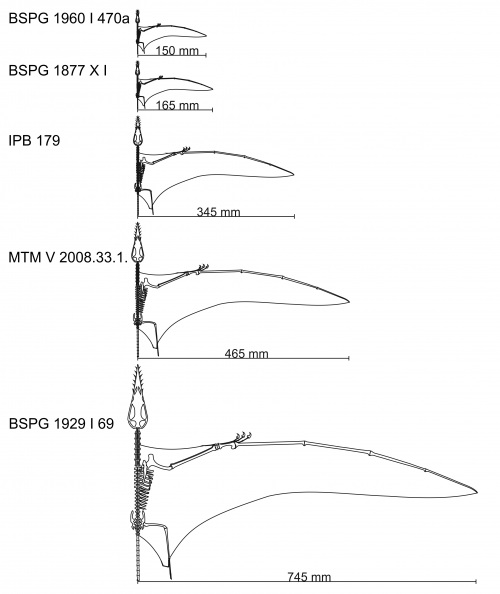 A list of Rhamphorhynchus specimens studied by Prondvai et al. (2012).