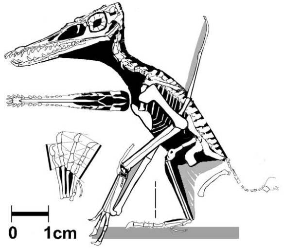 The MB.R. 3530.1 specimen
