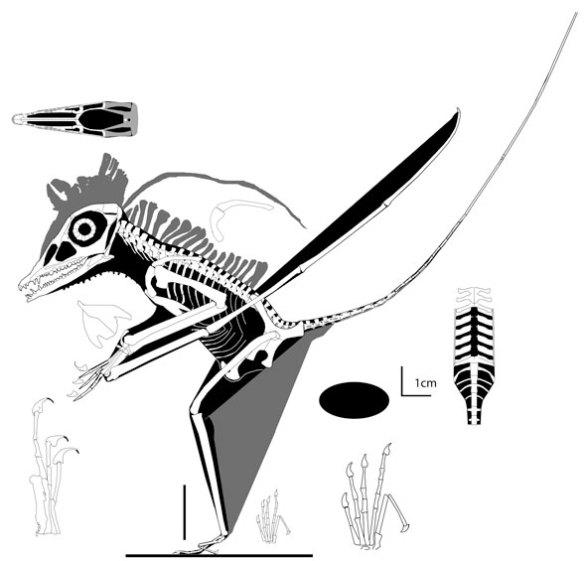 MPUM 6009, the Milan specimen, the most primitive known pterosaur