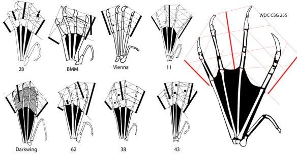 A selection of Rhamphorhynchus feet