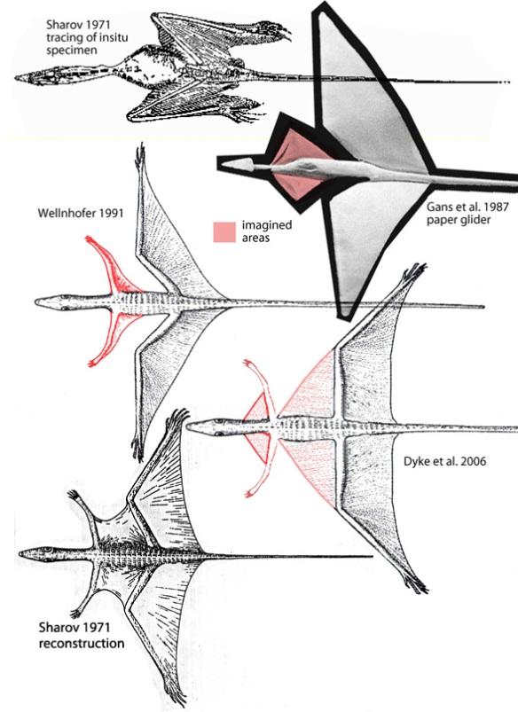 Various reconstructions of Sharovipteryx