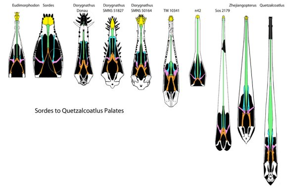 evolution of the pterosaur palate from Eudimorphodon to Quetzalcoatlus.