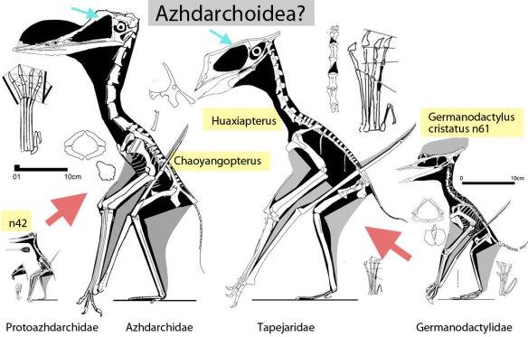 utative members of the Azhdarchoidea
