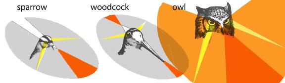 Binocular bird vision.